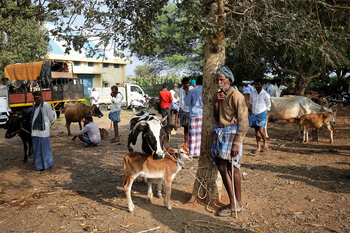 A cattle farmer waits for his turn at Terakanambi market.