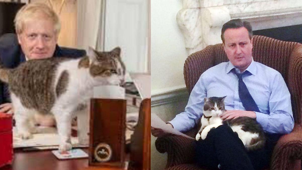 Twitter Celebrates #Larriversary for Tomcat Larry