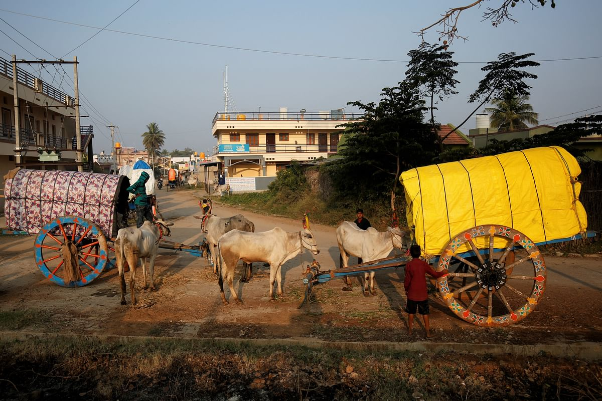 Two bullock-carts draw up near Terakanambi market where police keep a watch on sales to enforce Karnataka's anti-cow slaughter law.