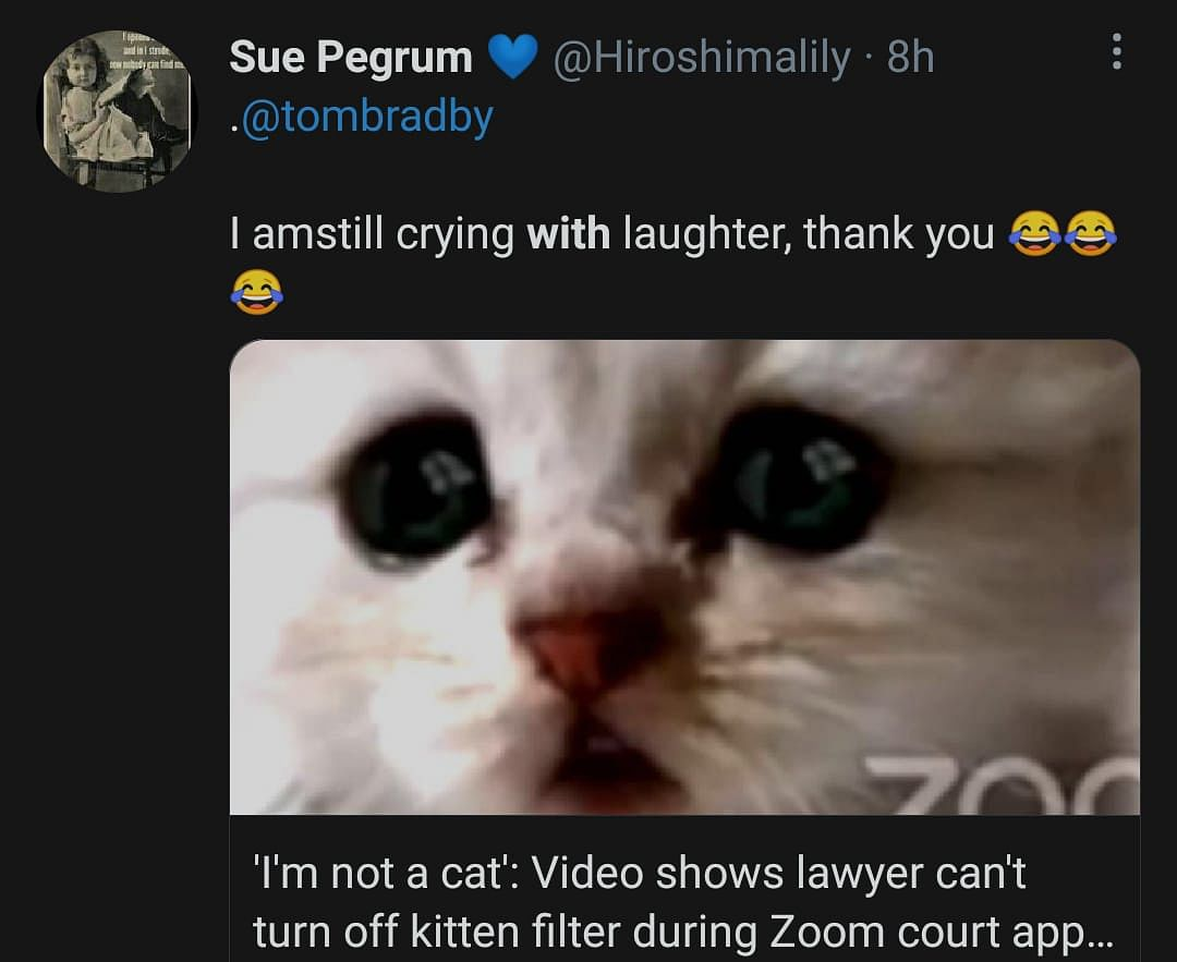 Watch: Lawyer Struggles to Turn off Cat Filter During Zoom Hearing