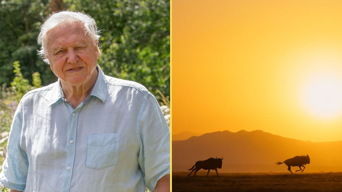 <p>Sir David Attenborough speaks about Sony BBC Earth's A Perfect PLanet.</p>