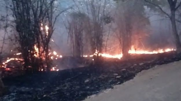 Madhya Pradesh's Bandhavgarh Tiger Reserve Ablaze Since 29 March