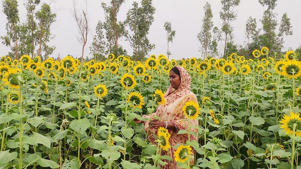 Livelihood of farmers like Madhabi Jana has improved after they shifted to organic farming due to lockdown cash crunch.