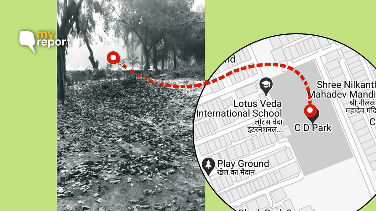Waste Piles Up, My Delhi  Park is Breeding Ground for Mosquitoes