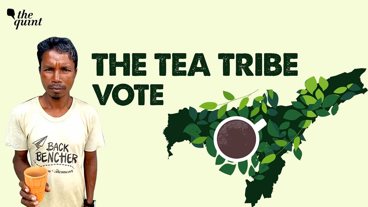 Assam's Tea Tribes: Merely Vote Bank or Do They Really Matter?