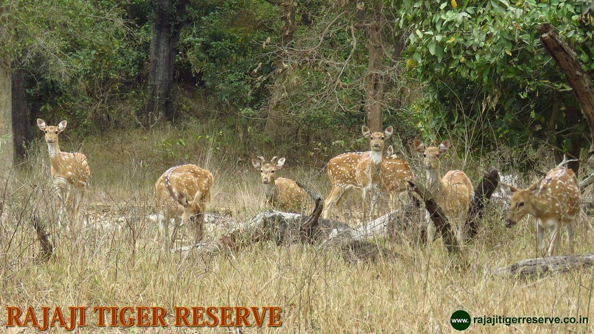 Image of Rajaji Tiger Reserve used for representation purpose.
