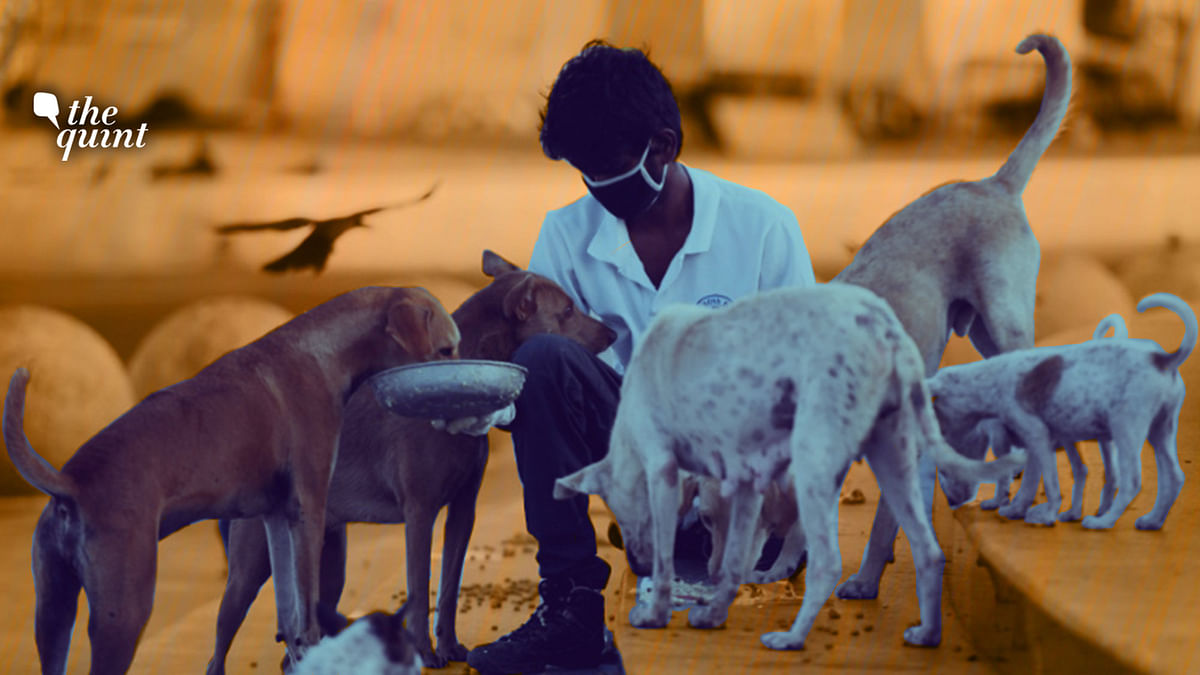The issue of feeding stray dogs has emerged as a major flashpoint between residents of housing societies.