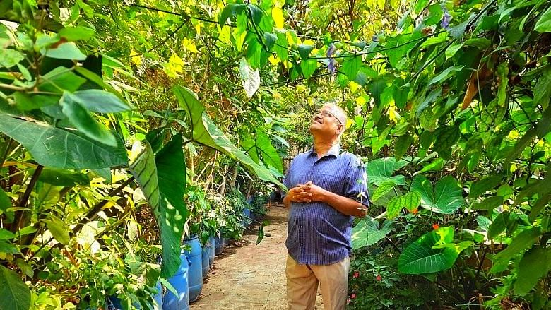 Nataraja says, thanks to the jungle on the terrace he does not require a fan during the summer months in Bengaluru.