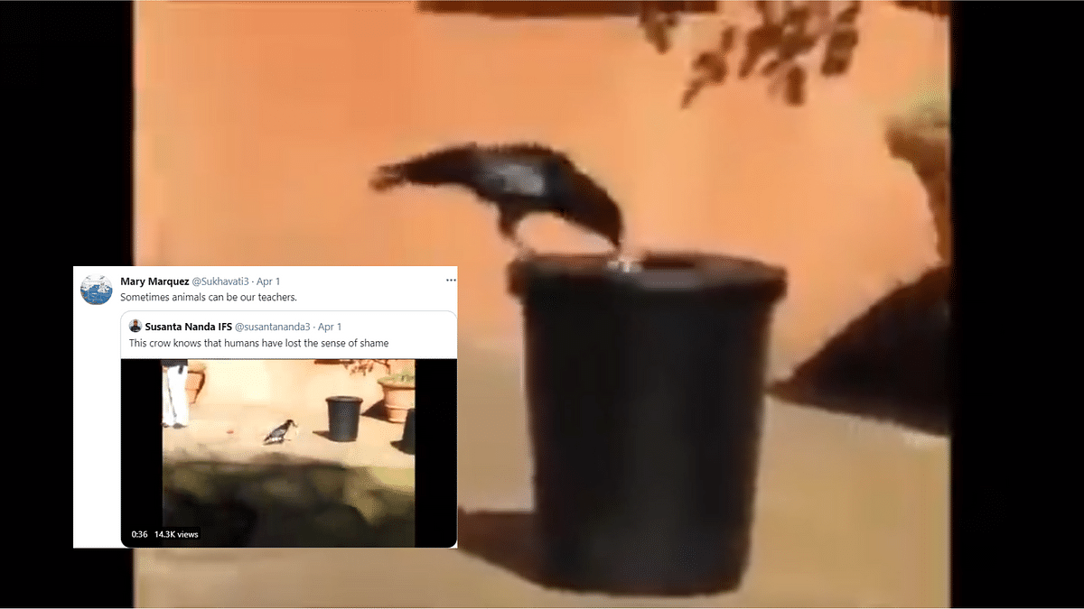 """<div class=""""paragraphs""""><p>Crow disposes garbage in trash can.</p></div>"""