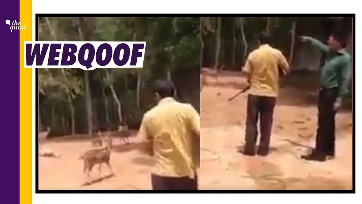 Old B'desh Clip Used to Show BJP MLA 'Anil Upadhyay' Hunting Deer