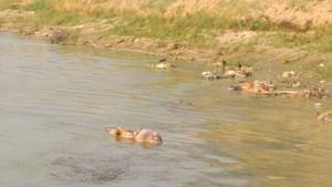 Centre Asks UP, Bihar To Prevent Dumping of COVID Bodies in Ganga
