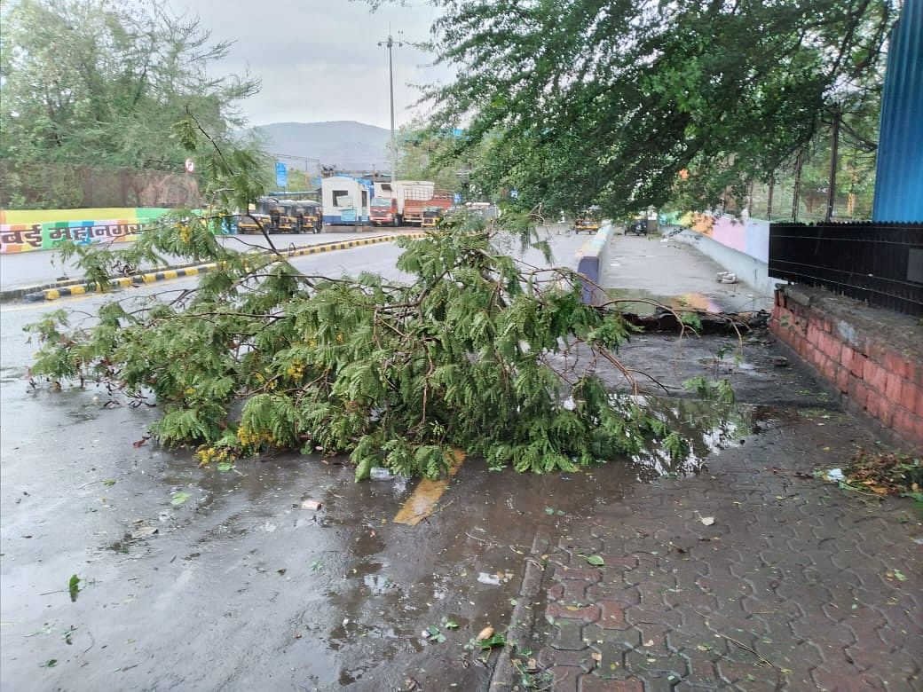 Strong cyclonic winds damage a tree  in Juinagar.