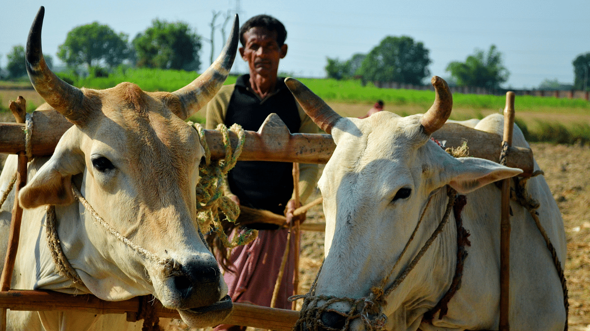 UP Govt Launches Help Desks for Cows Amid COVID, Twitter Reacts