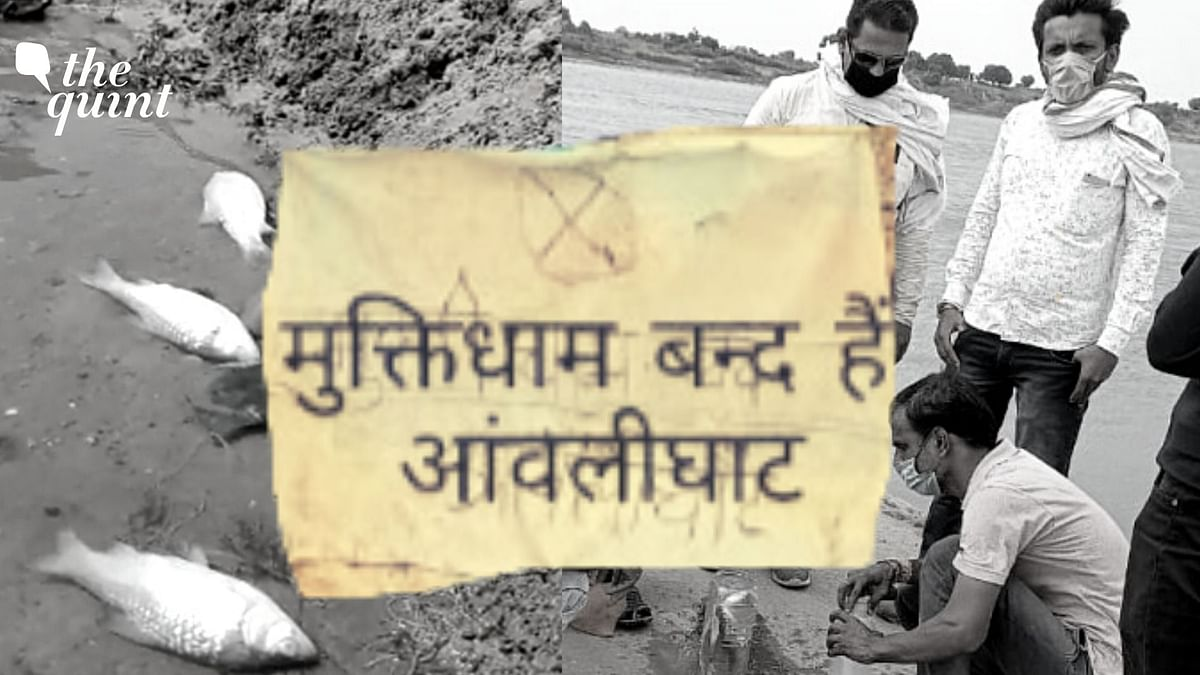 The fish in the river by the crematoriums have been found dead, allegedly poisoned by half-burnt bodies set adrift. The crematoriums in Hoshangabad district's Seoni Malwa block have been shut since Tuesday night, after the incident came to light.