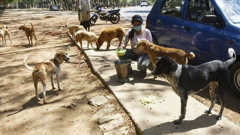 A Young Woman in Ranchi Feeds Over 200 Dogs Every Day