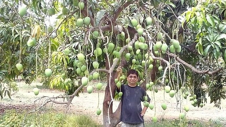 Gujarat Farmer Rajesh Shah used the technique called girdling to make the fruit trees produce more.