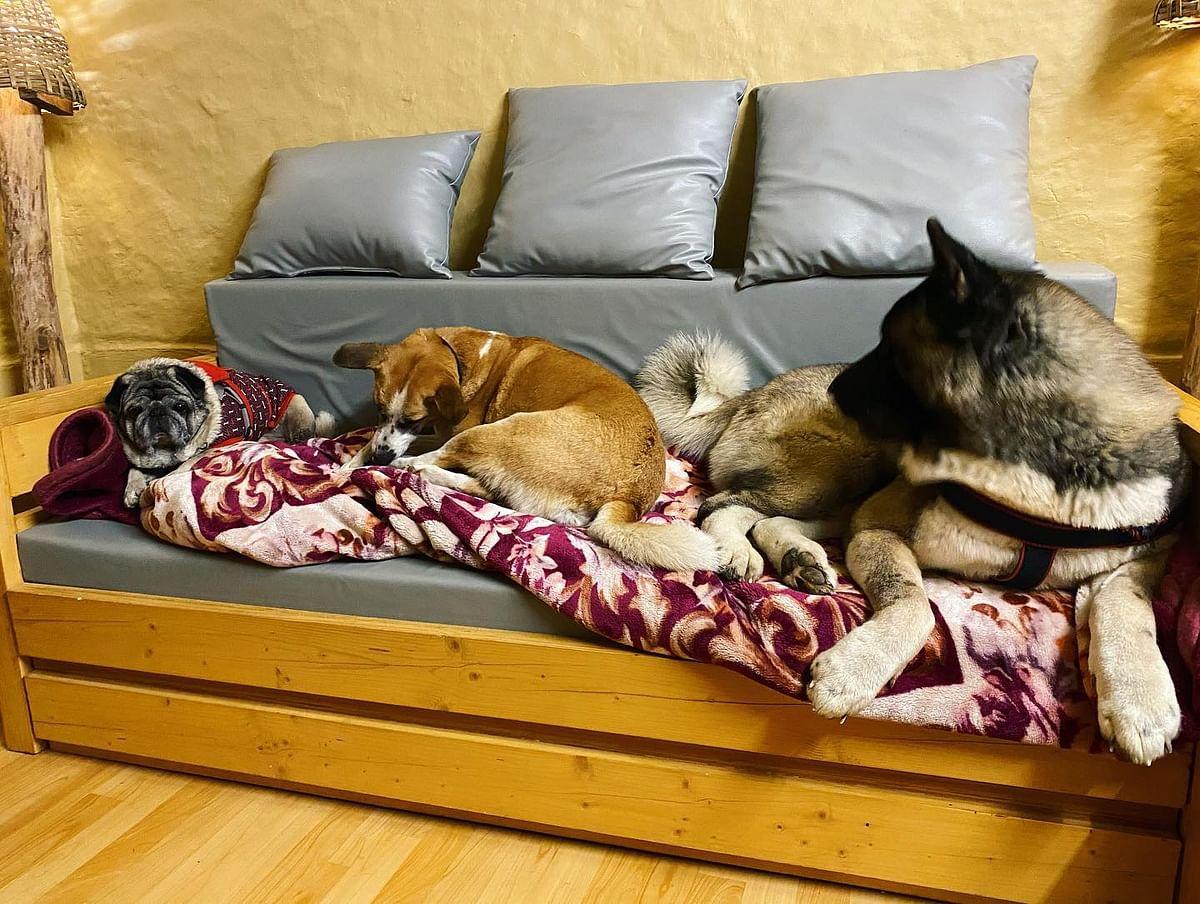 Pet Home Boarding, Delhi