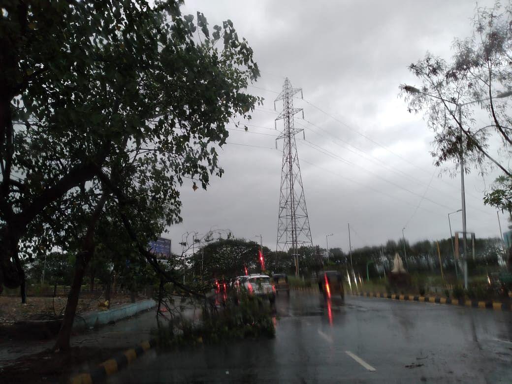 Another tree falls because of the Cyclone Tauktae in Navi Mumbai's Sanpada locality.
