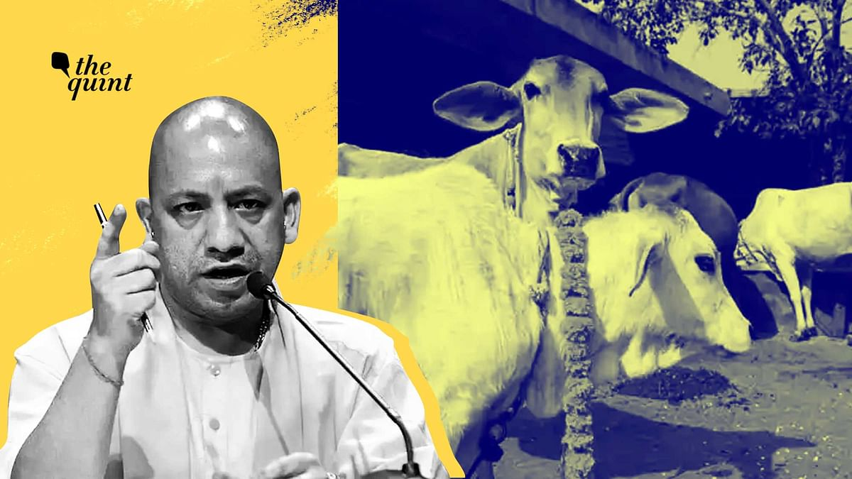 U-Turn by Yogi's UP Govt; Now Says That Oximeters Weren't for Cows