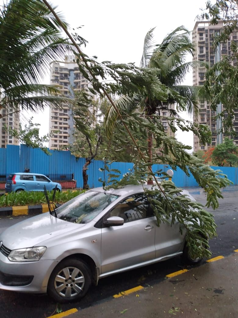 A branch that fell on a car parked in Navi Mumbai.