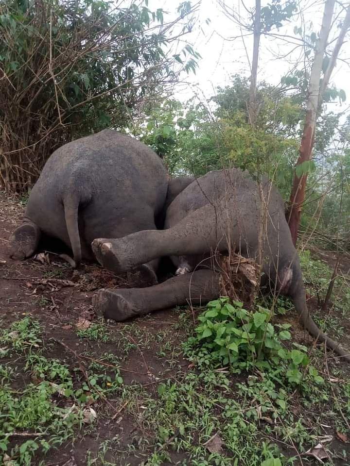 'Lightning Strike' Kills Herd of 18 Elephants in Assam's Nagaon