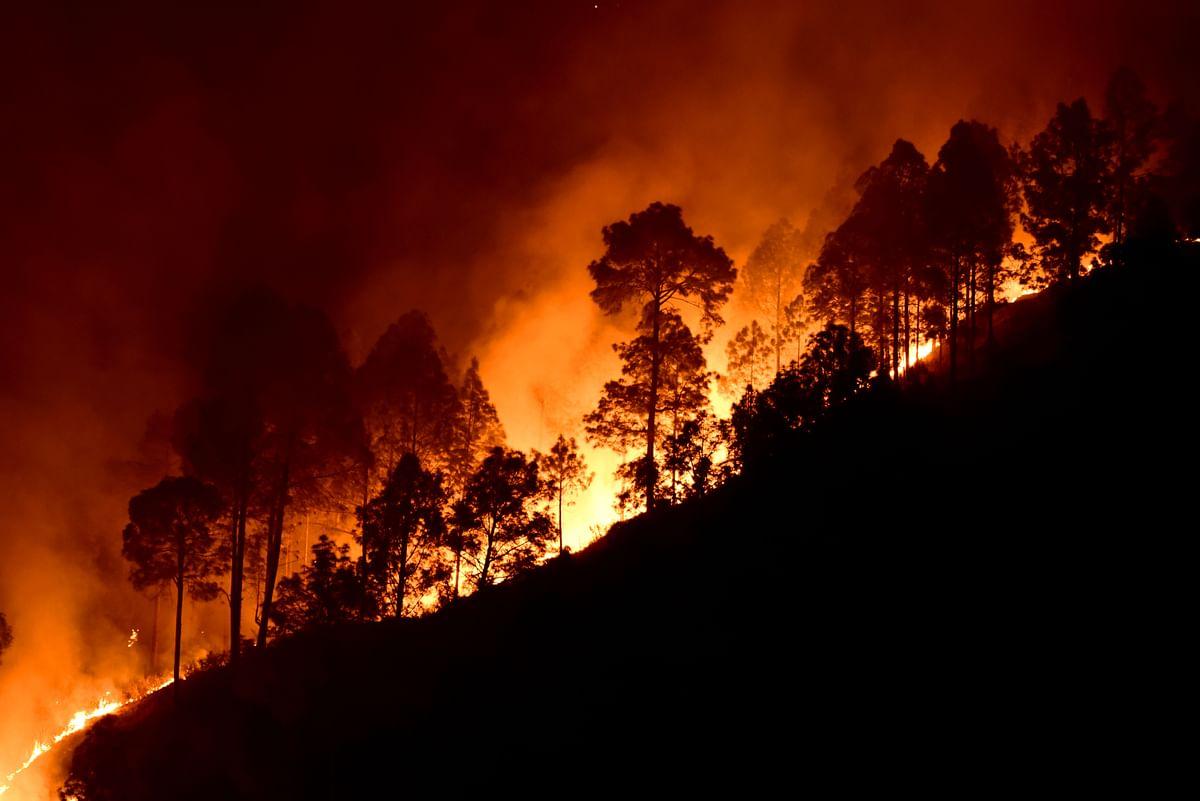 Floods, Forest Fires: SOS From Uttarakhand on Environment Day 2021