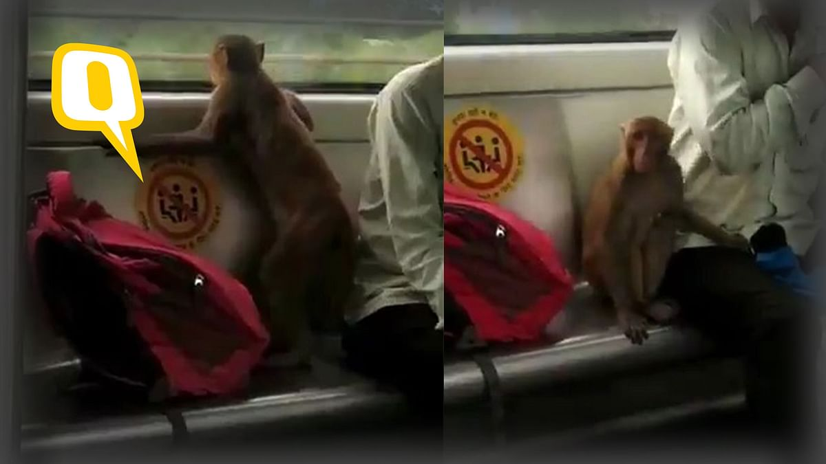 Watch   Monkey Hitches Ride With Commuters on Delhi Metro