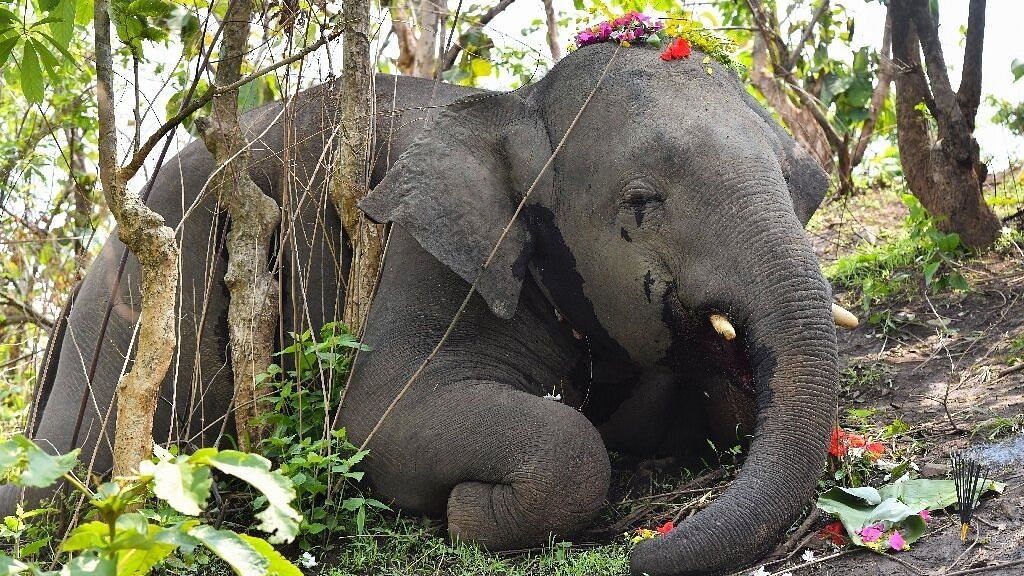 Death of 18 Elephants By Lightning: Unearthing a Web of Lies