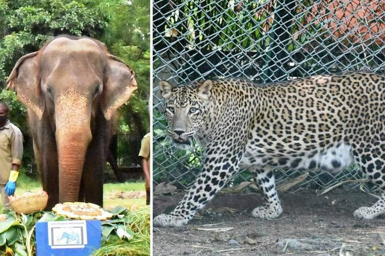Hyderabad Zoo Mourns Death of Beloved Elephant  and Leopard