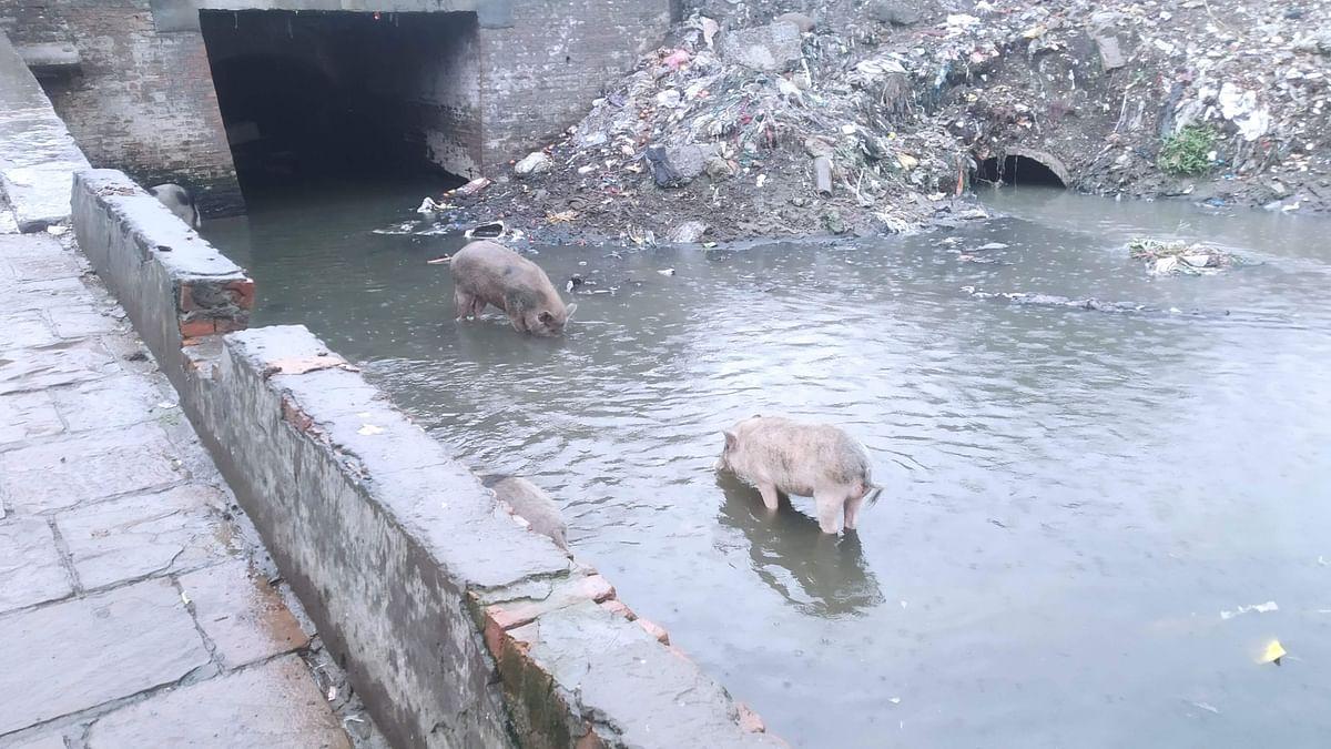 "<div class=""paragraphs""><p>Sewage flowing into the stream.</p></div>"