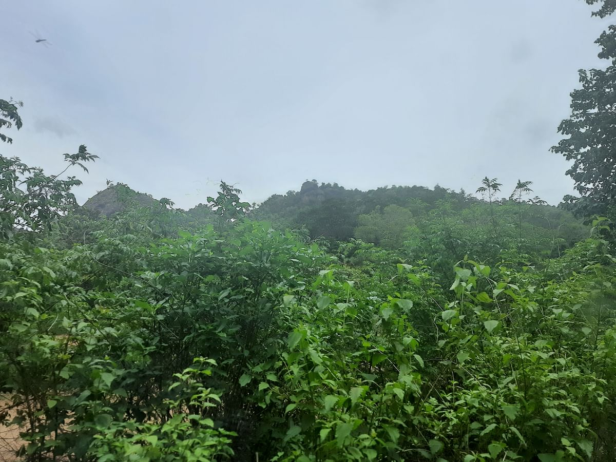 Jawadhi hills of the Eastern Ghats fall in Vellore, Tiruvannamalai and Tirupathur districts.