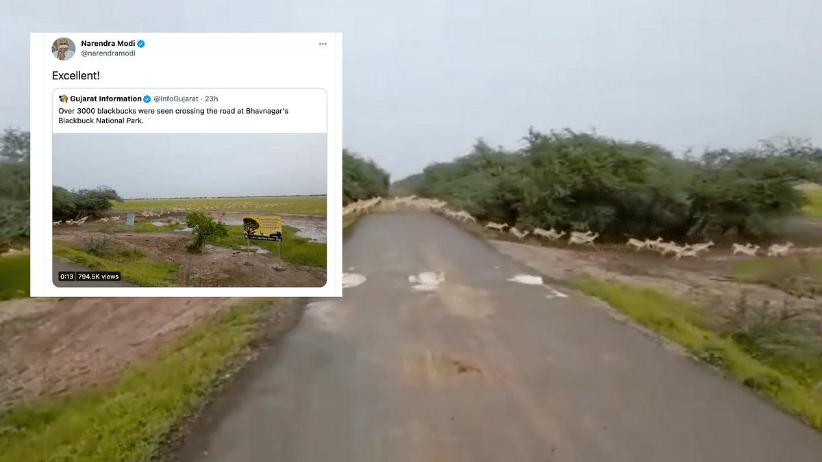 "<div class=""paragraphs""><p>PM Modi shares video of 3000 blackbucks crossing the road</p></div>"