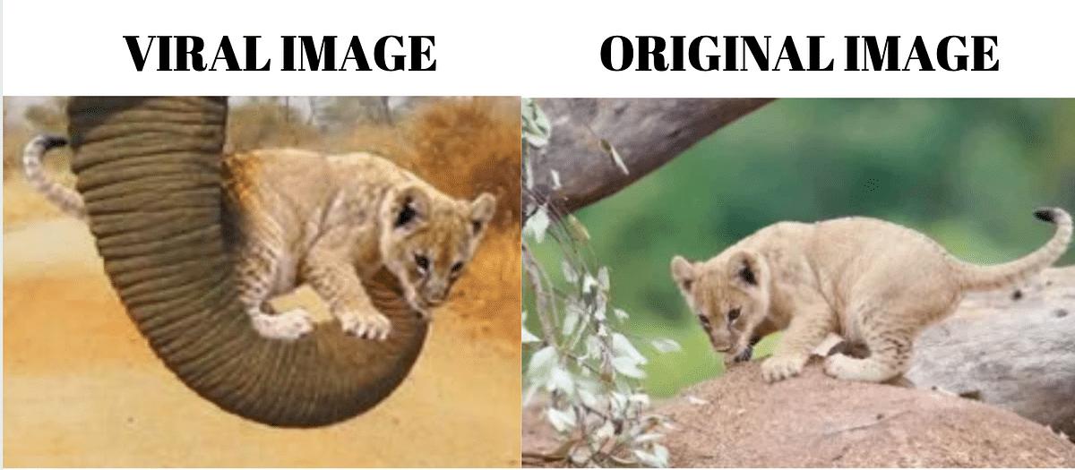 "<div class=""paragraphs""><p>Left: Viral image. Right: Original image.</p></div>"