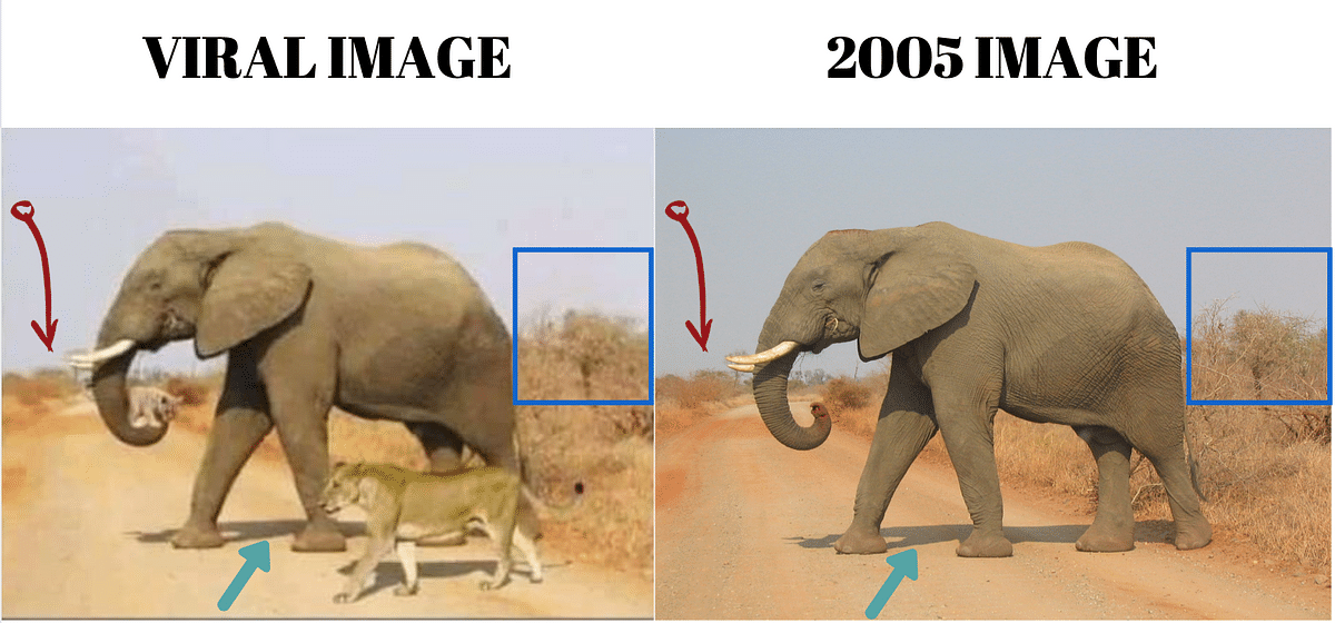 """<div class=""""paragraphs""""><p>Left: Viral image. Right: Image from 2005.</p></div>"""
