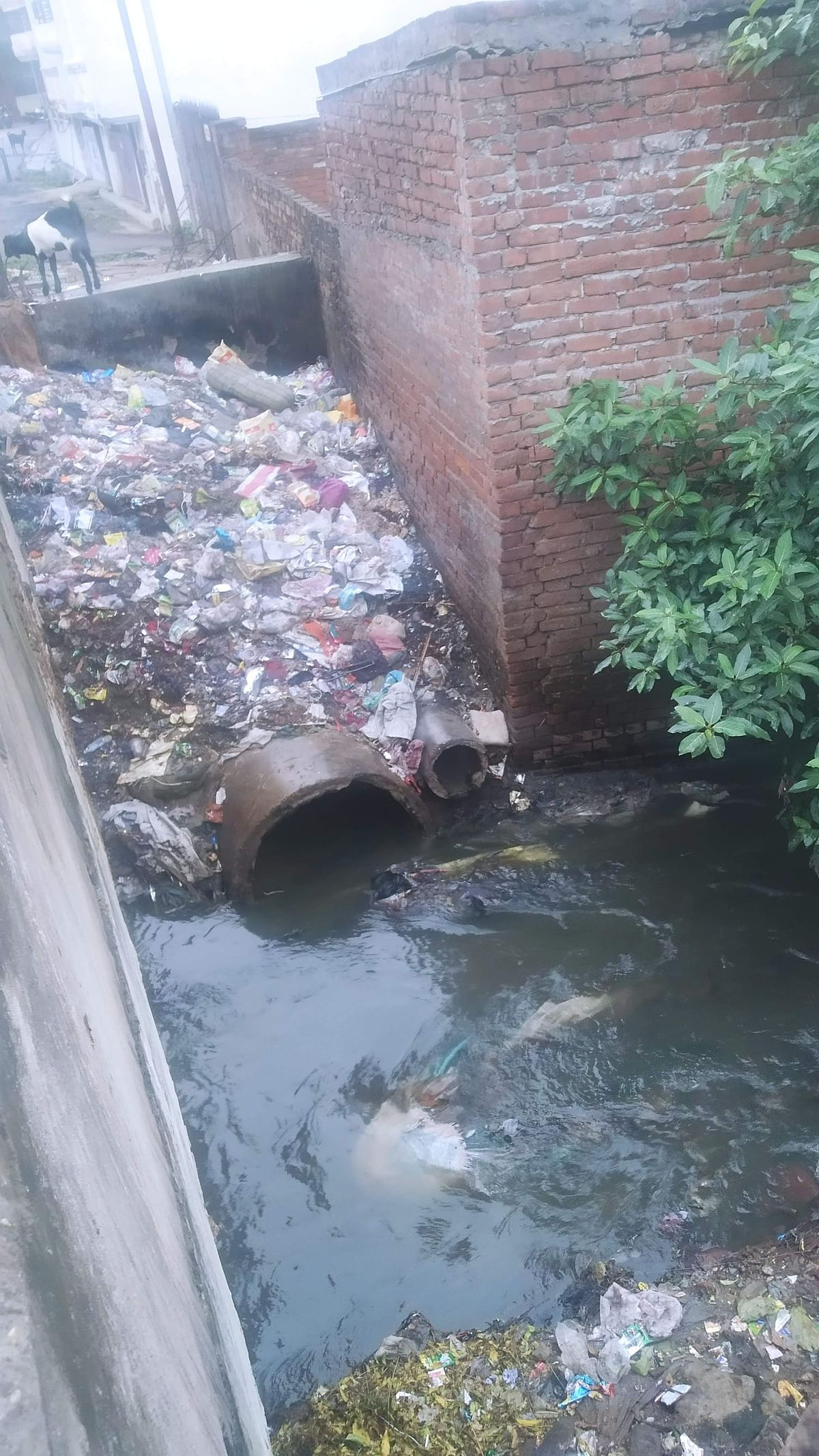 """<div class=""""paragraphs""""><p>The river that has turned into nullah.</p></div>"""