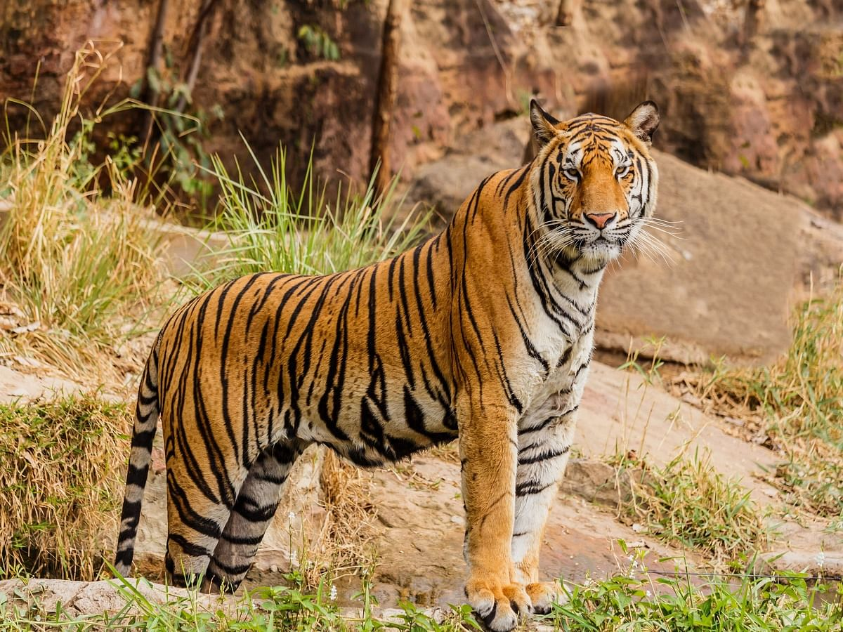"""<div class=""""paragraphs""""><p>International Tiger Day&nbsp;History, Significance and Quotes</p></div>"""