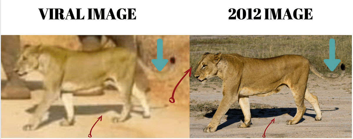 """<div class=""""paragraphs""""><p>Left: Viral image. Right: Image from 2012.</p></div>"""