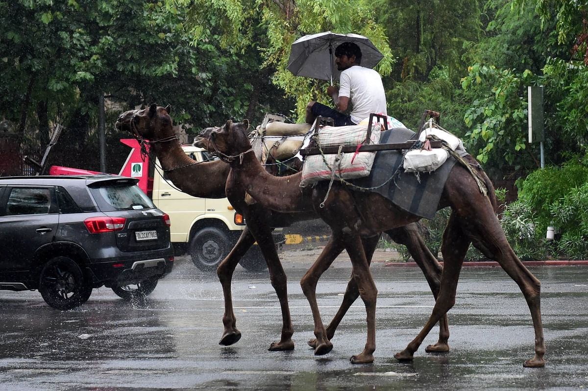 """<div class=""""paragraphs""""><p>A man holds an umbrella as he rides on camels during rain, in New Delhi on Monday.</p></div>"""