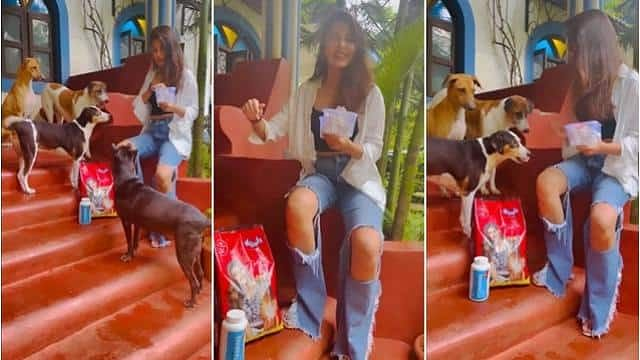 Watch: Rhea Chakraborty Feeds Stray Dogs, Plays With Them