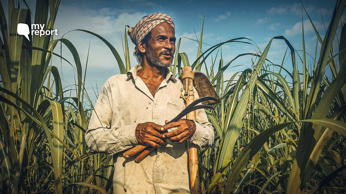 Assam's Sugarcane Farmers Fight Pandemic & Floods Without Govt Support