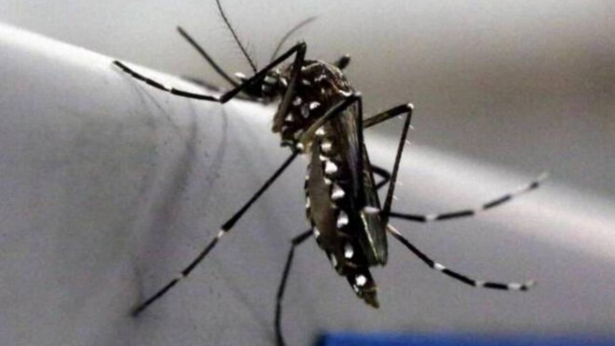 Centre Rushes Team to Maharashtra After State Reports First Case of Zika