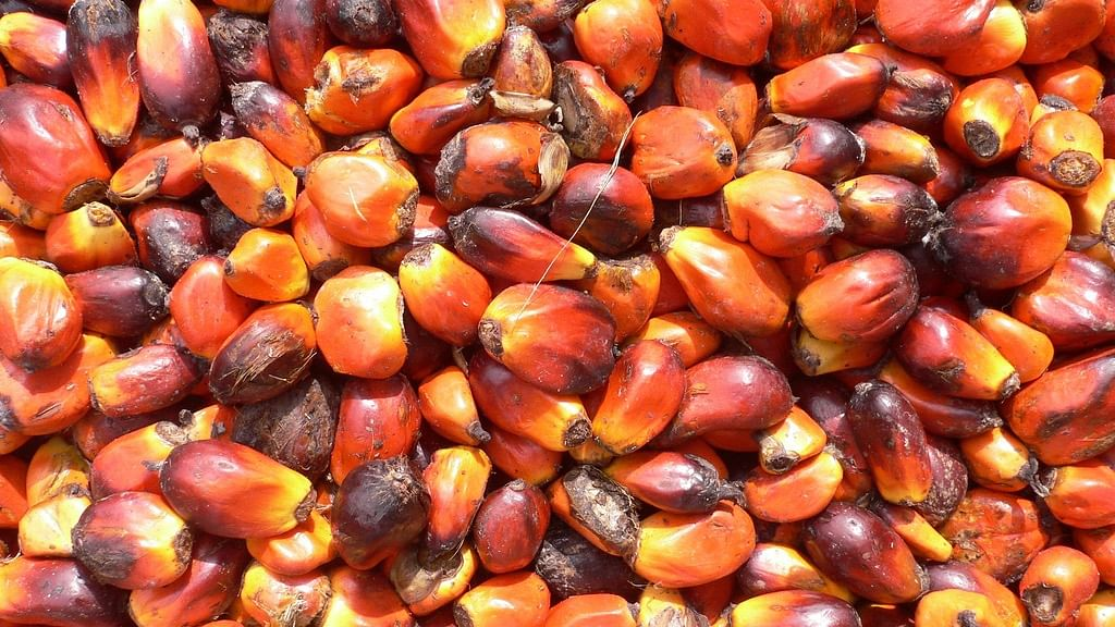 """<div class=""""paragraphs""""><p>The Cabinet recently approved Rs 11,040 crore for a centrally sponsored scheme that will focus on increasing productivity of oil seeds and oil palm in the Northeastern region and the Andaman and Nicobar Islands.</p></div>"""