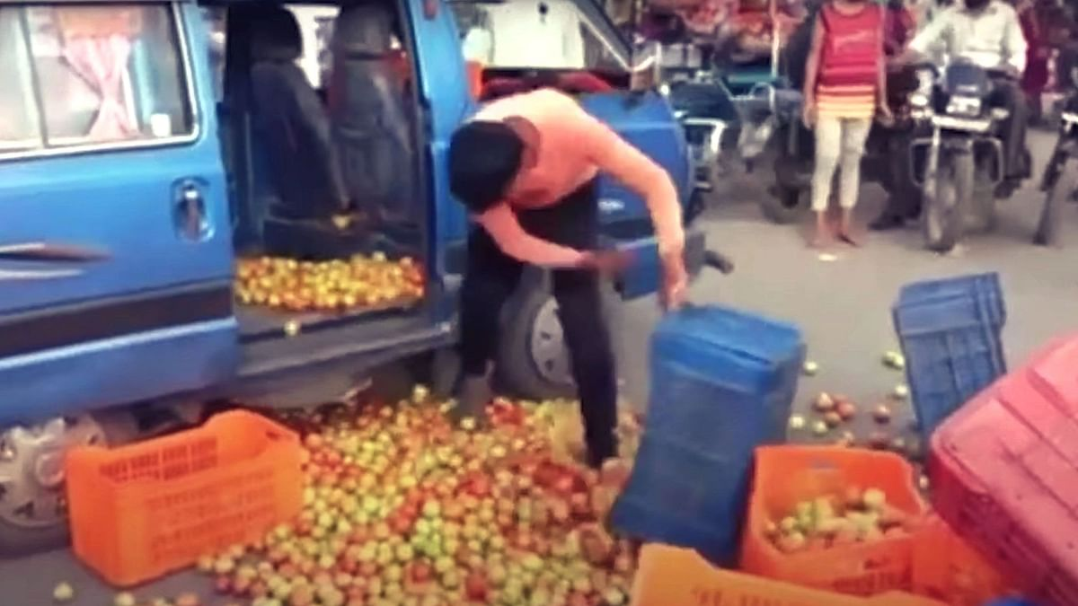 Farmers in Nashik Dump Crates of Tomato as Wholesale Market Price Plummets