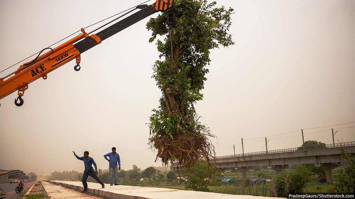 """<div class=""""paragraphs""""><p>With poor transplanting methods and shoddy aftercare, trees stand a poor chance of survival, show examples from across India.</p></div>"""