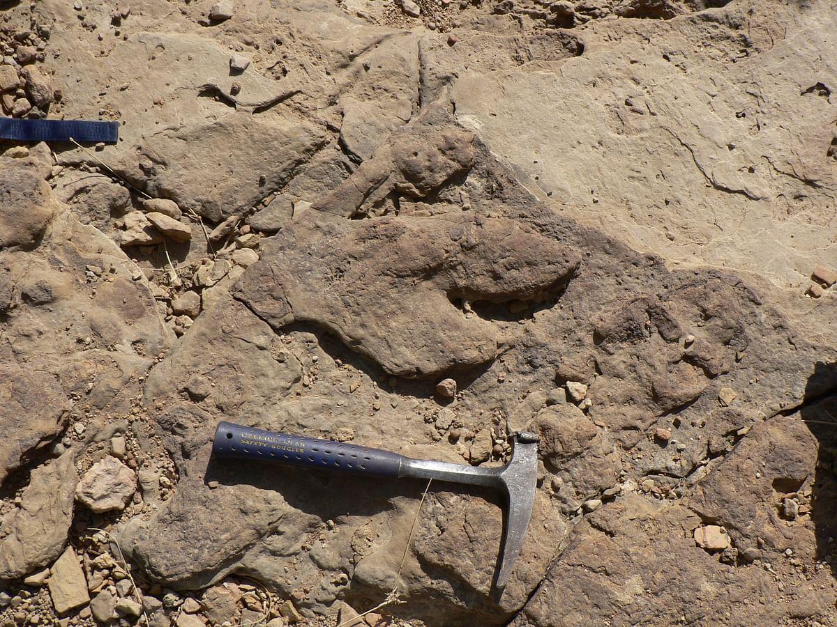 "<div class=""paragraphs""><p>Rare dinosaur footprint found in Jaisalmer.</p></div>"