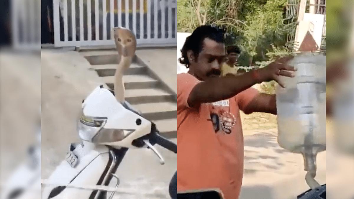 Viral Video of Cobra Inside Scooter Stuns Netizens