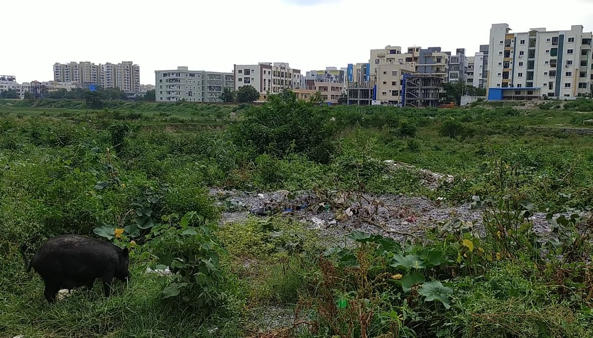 """<div class=""""paragraphs""""><p>Waste around the lake a feeding spot for stray animals.</p></div>"""