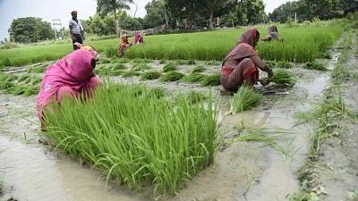 eNAM Can Help Farmers Earn Better Profits – But It Has a Long Way to Go