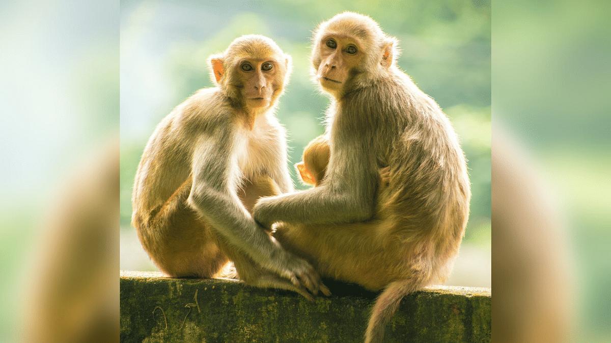 Madhya Pradesh: Monkey Snatches Rs 1 Lakh From Man In Autorickshaw