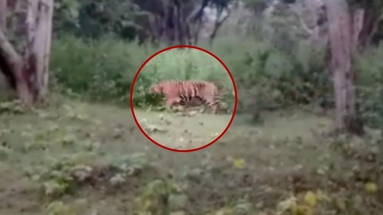 """<div class=""""paragraphs""""><p>According to the order, special teams have been constituted to track and capture the tiger.</p></div>"""